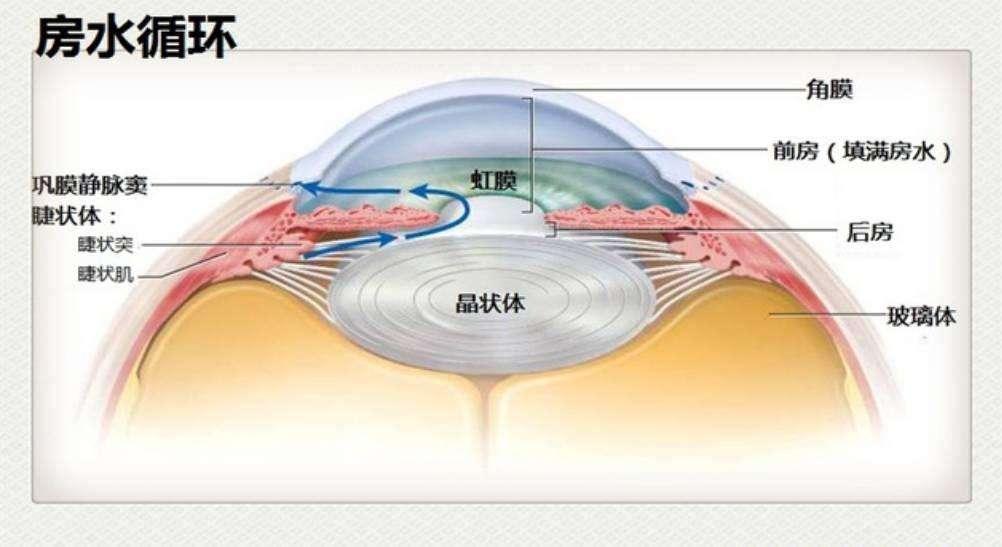 [新聞] 眼壓高或可損傷視神經發展為青光眼
